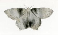 Emerald Moth Cut Out 1