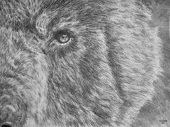 Eye Of The Black Bear