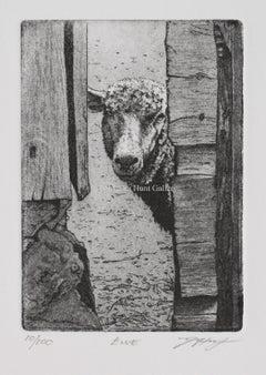 Ewe by David A.Hunt