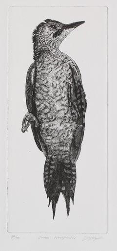 Green Woodpecker by David A. Hunt