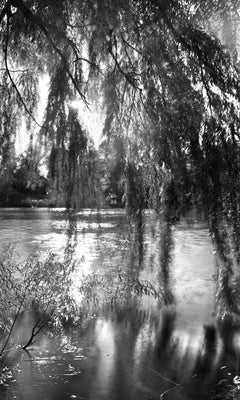Central Park, New York City Black and White Photograph, Pond and Willows