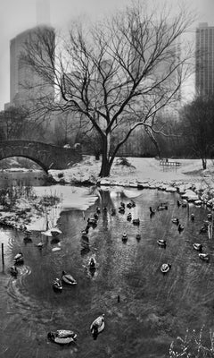 Central Park, New York City Black and White Photograph, Pond, Ducks and Snow