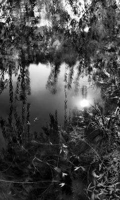 Central Park, New York City Black and White Photograph, Pond and Weeping Willow