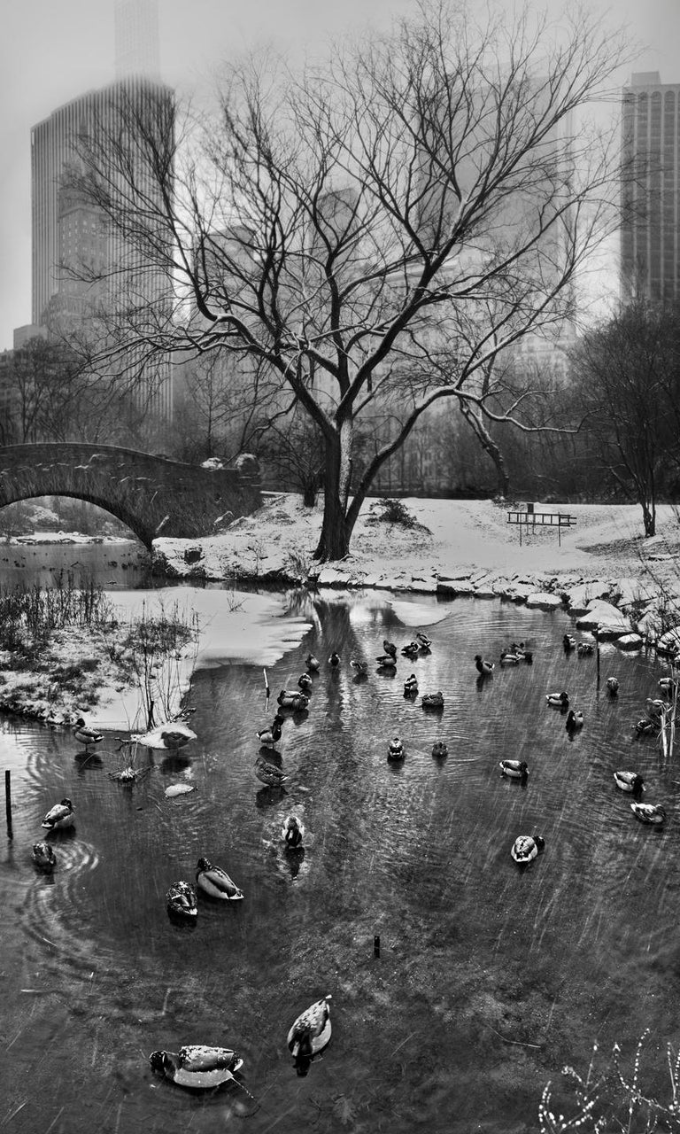 Jeff Chien-Hsing Liao Great Snow, 2015 Archival Pigment Print 66 x 40 inches Edition of 6  This photograph is from Liao's series, Central Park New York - 24 Solar Terms.  The title of the series takes its name from the ancient Chinese lunar