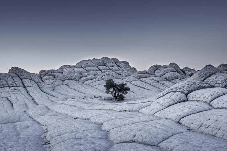 """Tom Jacobi Landscape Photograph - Lonely Tree, USA, from the series """"Grey Matter(s), 2015, 123 x 175 cm"""