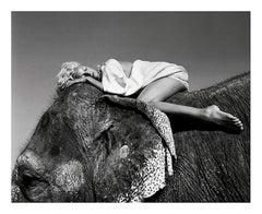 Untitled, India - White Story, Fashion Photography, Wildlife Photography