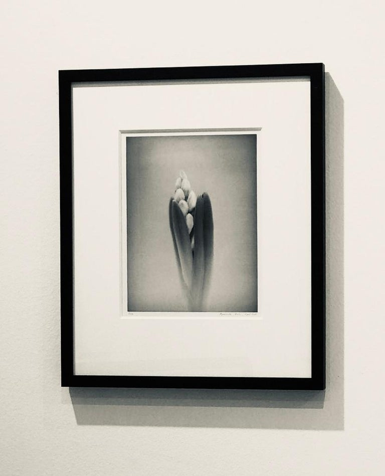 Hyacinth #2, Black and White Photography  For Sale 1