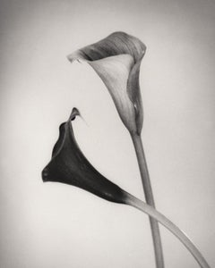 Calla #2, Black and White Photography