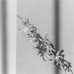 Orchid, 1980: Printed in 2012