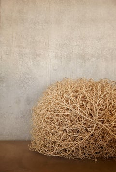 Four Corners Tumbleweed