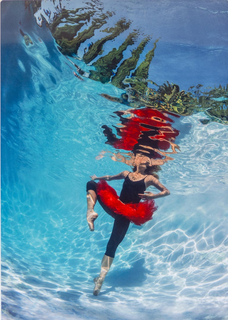 """""""Lombardy Ballet"""" by Alex Sher Original Underwater photography  22"""" x 15"""" inch Edition of 12   The image is infused directly onto a solid sheet of aluminum. Each metal print comes ready-to-hang.  Alex Sher is a Los Angeles based fine art"""