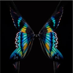 """""""Butterflies B8"""" Original photography Limited Edition of 6 by Giuliano Bekor"""