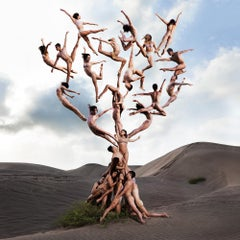 """""""The Tree Of Life"""" Photography 40"""" x 40"""" inch Ed. 9/12 by Rob Woodcox"""