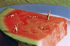Water Melon - 21st Century, Contemporary, Miniature Photography, Pigment Print