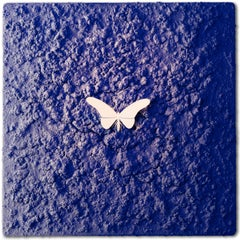 Vanish 01.07 Blue White W - 21st Century, Contemporary, Figurative, Butterfly