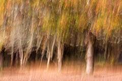 Autumn Palette - Archival Pigment Print, Contemporary B&W photography
