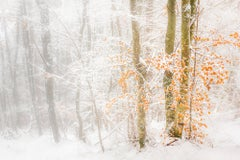 Leaves in Deep Snow- 21st Century Contemporary Landscape photography