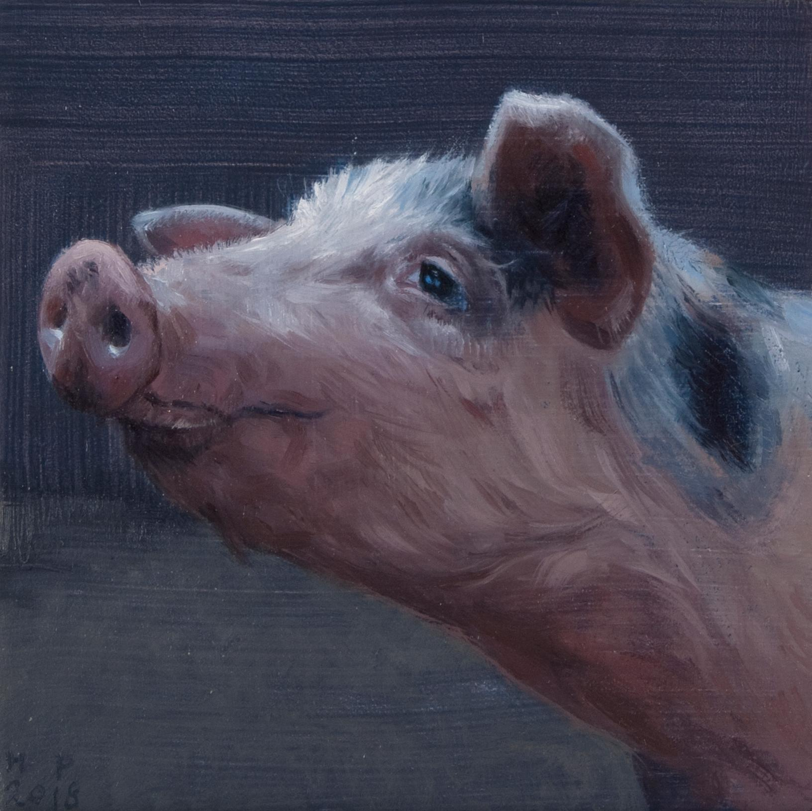 Small Pig's head- 21st Century Contemporary Animal Painting of a Pig
