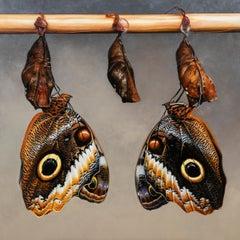 Owl Butterflies - Joran van der Haar, 21st Century Contemporary Oil Painting