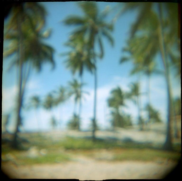 Robin Rice Color Photograph - Arembepe Palms #2, Bahia, Salvador, Brazil, 1998