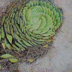 Aloe Polyphilia, Lesotho 2 - Contemporary, Oil on Canvas, 21st Century