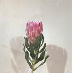 'Queen Protea' British Realist still life oil painting