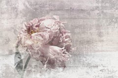 """Romantic Peony Shabby Chic Pink Gray Mixed Medium on Canvas 36x48"""""""