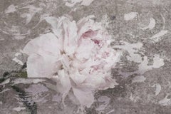 Blush Gray Spring Peony 1, Shabby Painting Hand Embellished Giclee on Canvas