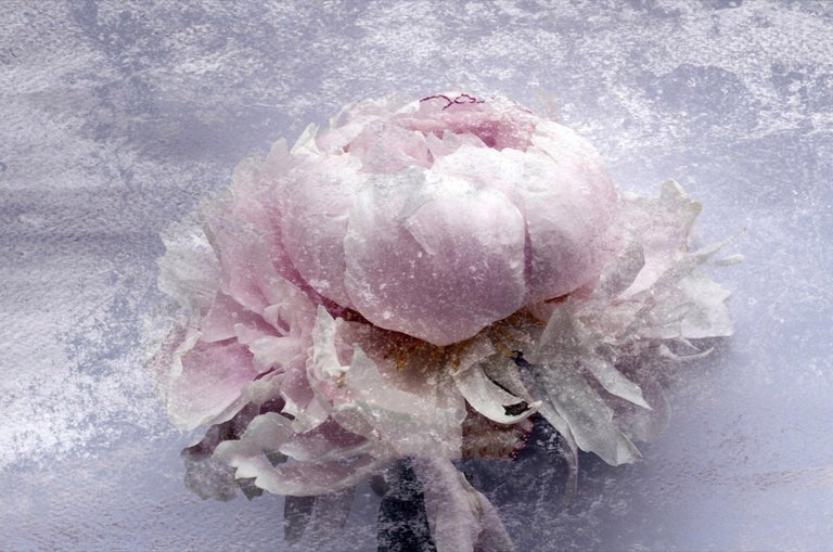 Blush Mauve Silver Peony Shabby Painting Hand Embellished Giclee on Canvas  Collector's Edition Embellished Art Canvas Giclee With Brushstrokes and rich texture.  State-of-the-art HAND EMBELLISHED ∽ MUSEUM QUALITY ∽ DISPLAY READY Giclee