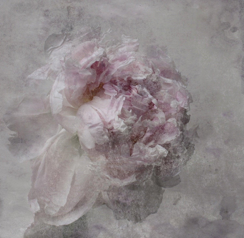 Nostalgic Blush Peony Painting Shabby Painting Hand Embellished Giclee on Canvas