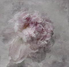 Nostalgic Blush Peony Painting Shabby Painting Hand Embellished Giclee on Canvas