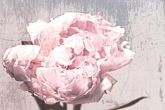 Shabby Floral Pink Rustic Peony Painting Hand Embellished Giclee on Canvas