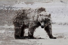 Bear Art, Bear Painting Fine Art Hand Embellished Giclee on Canvas