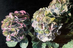 Original oil painting by Robert Lemay  ANTIQUE HYDRANGEAS