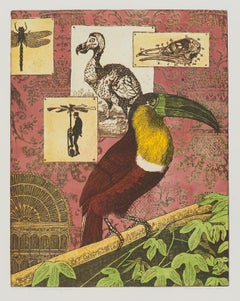 """Toucan Bird"" - Interior of an Ornithologist - Annemarie Petri"