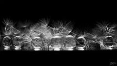 "Anna Golovanova - ""Dandelion Drip"""