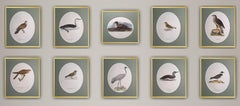 "Magnus von Wright - ""Birds Drawings Composition"" - unique ornithologieset of 10"