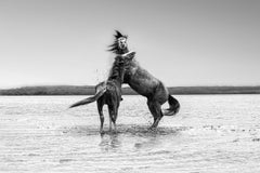 The Pugilist - 36x48 Contemporary Black and White Photography of Wild Horses