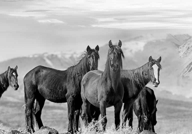 High Sierra Mustangs - Contemporary Black and White Photography of Wild Horses - Gray Landscape Photograph by Shane Russeck