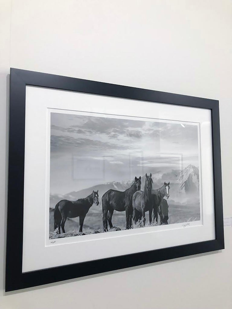 This is a contemporary black and white photograph of Wild Mustangs.