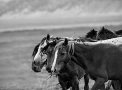 un·tam·a·ble - 36x48  Contemporary  Photography of Wild Horses