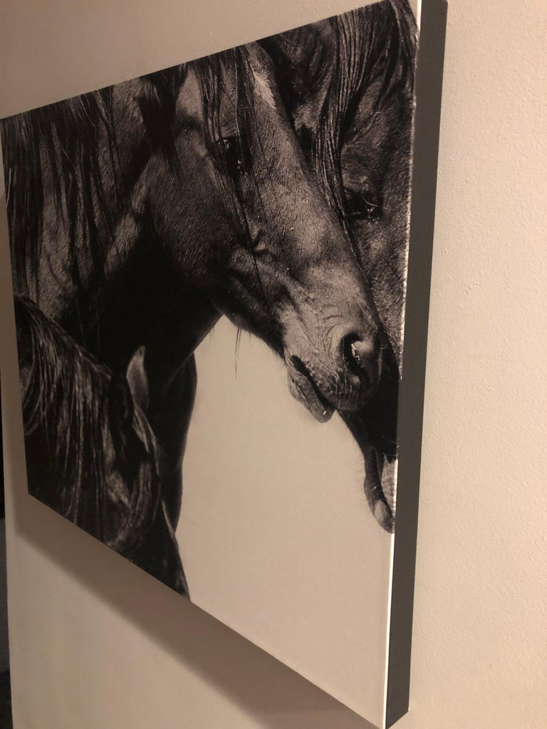Shane Russeck Studio Canvas Gallery Wraps are made with a print on Professional Photo Paper bonded onto museum quality canvas, or a Fine Art Print printed directly onto canvas material. The print is then wrapped around an artist's stretcher frame,