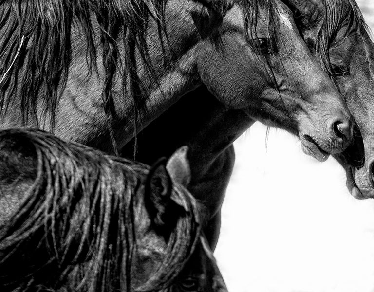 Canvas Print - Contemporary  Photography of Wild Horses 20x24 - Art by Shane Russeck