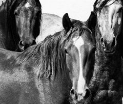 Canvas Print - Contemporary  Photography of Wild Horses 20x24