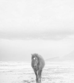 Wild Horses on Beach- 30 x 30  Contemporary  Photography (Last of the Editon)