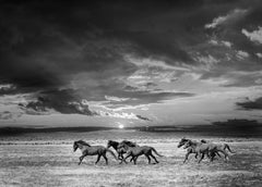 Chasing the Light  18x24 - Contemporary Black & White Poster of Wild Horses