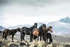 Mountain Mustangs  18x24 - Contemporary Poster of Wild Horses