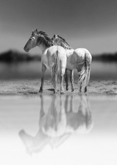 """""""Reflections""""  36x48 - Photography of Wild Horses - (1stdibs Special Price)"""