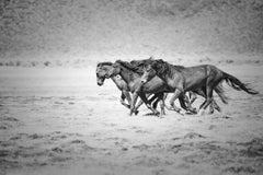 Black and White Metal Photo of Wild Horses Mustangs (Special 1stdibs Price)