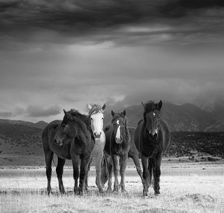 The Calm - Photography of Wild Horses(Special 1stdibs Price) - Gray Black and White Photograph by Shane Russeck